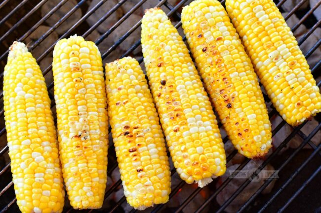 closeup grilled corn on cob on a grill